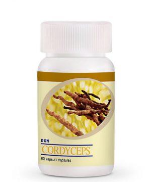 dxn-cordyceps